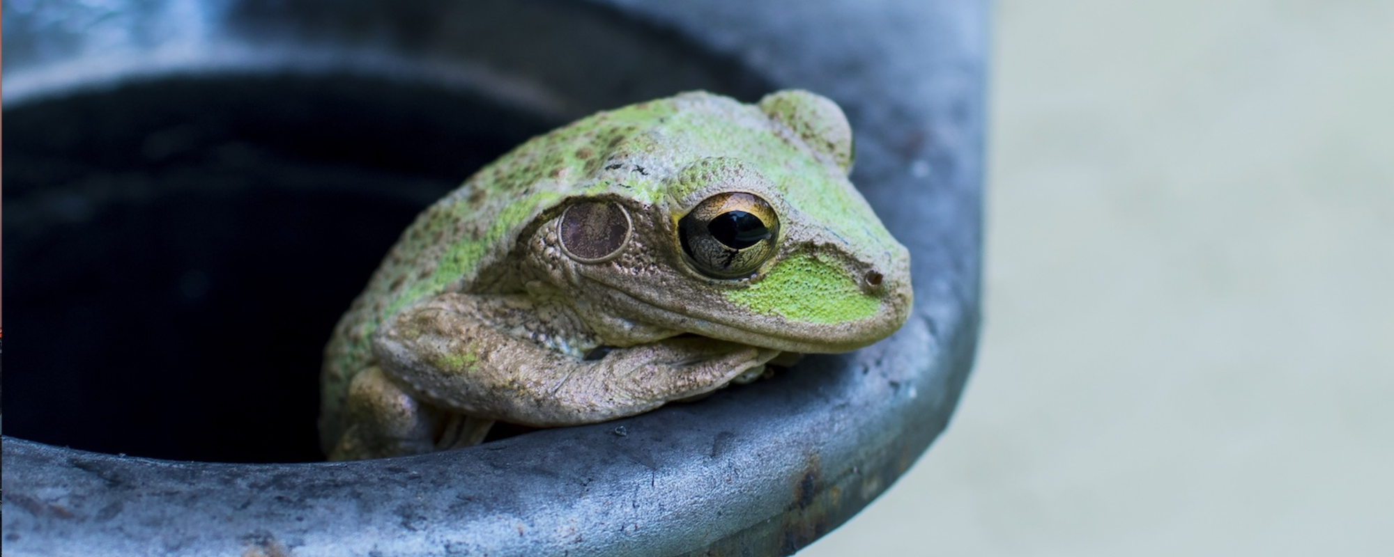 """""""Banks, don't behave like the boiling frog. You won't get out alive."""""""
