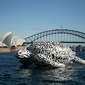 CITI: Australia's banks are too slow and 'not relevant enough'