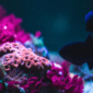 Reef Finance Raises $3.9M for Cross-Chain DeFi on Polkadot